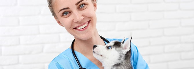 Vet Tech Schools Veterinary Assistant Programs Near You