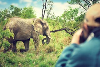 Photographer taking pictures of an elephant eating grass in a wooded area with low branches and lots of greenery