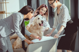 Group of professional women with an office dog